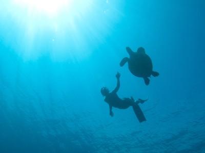 Ocean Film Festival comes to London 8-10 October 2015!